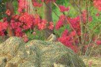 """落在""""嘉园""""的飞鸟集"""